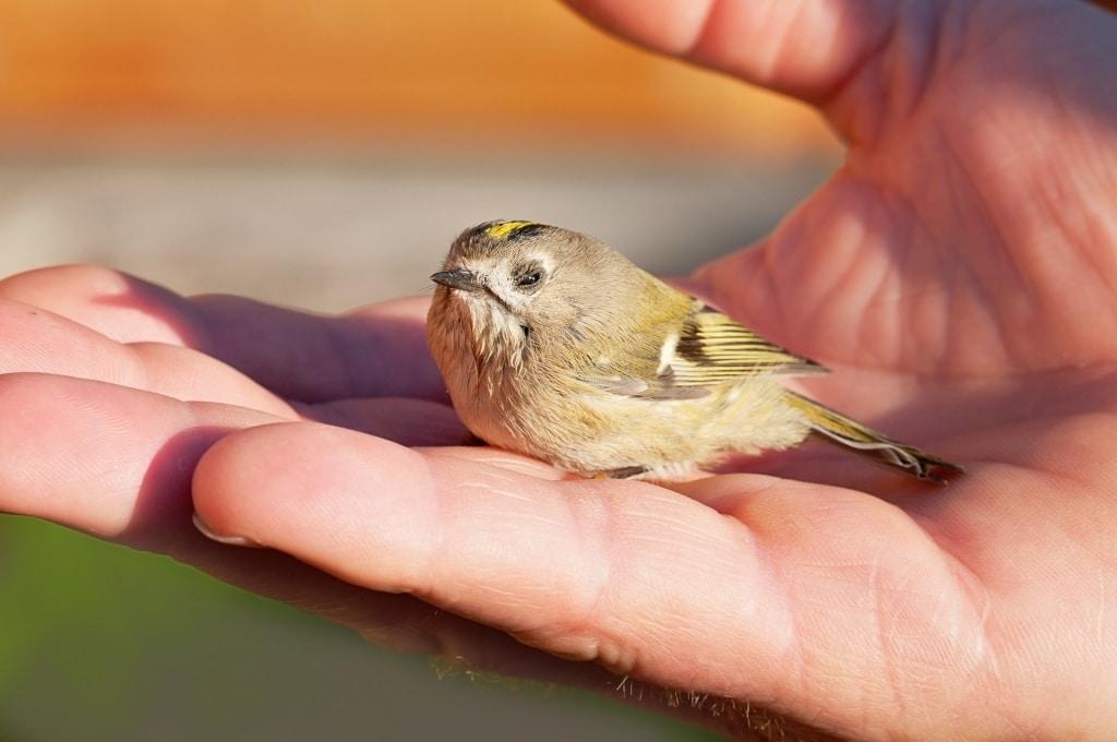 """""""Mais vale um pássaro na mão do que dois a voar"""""""